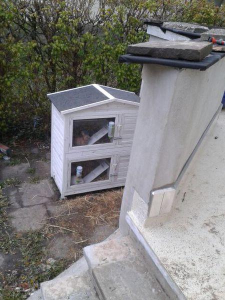 herzlich willkommen kaninchen vom klaiberg unsere. Black Bedroom Furniture Sets. Home Design Ideas