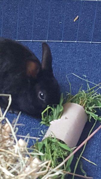 Herzlich Willkommen Kaninchen Vom Klaiberg Unsere Auswanderer 3